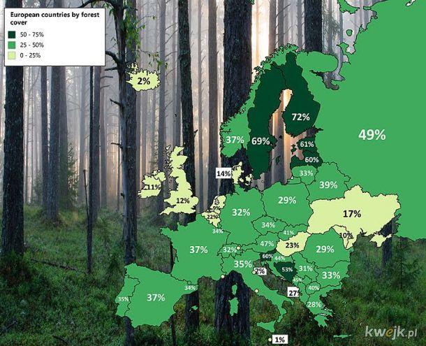 Zalesienie w krajach europy. Nawet niemcy stoją tu lepiej
