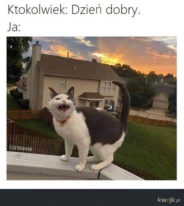 Meaowww!