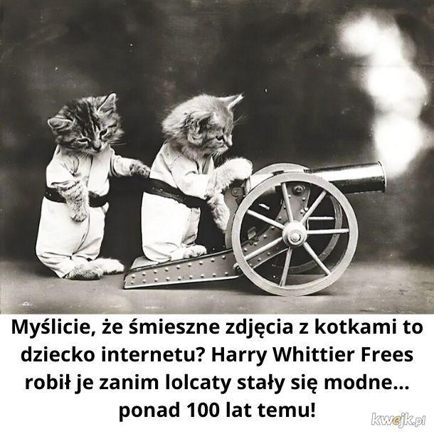 Śmieszne kotki zawsze były śmieszne