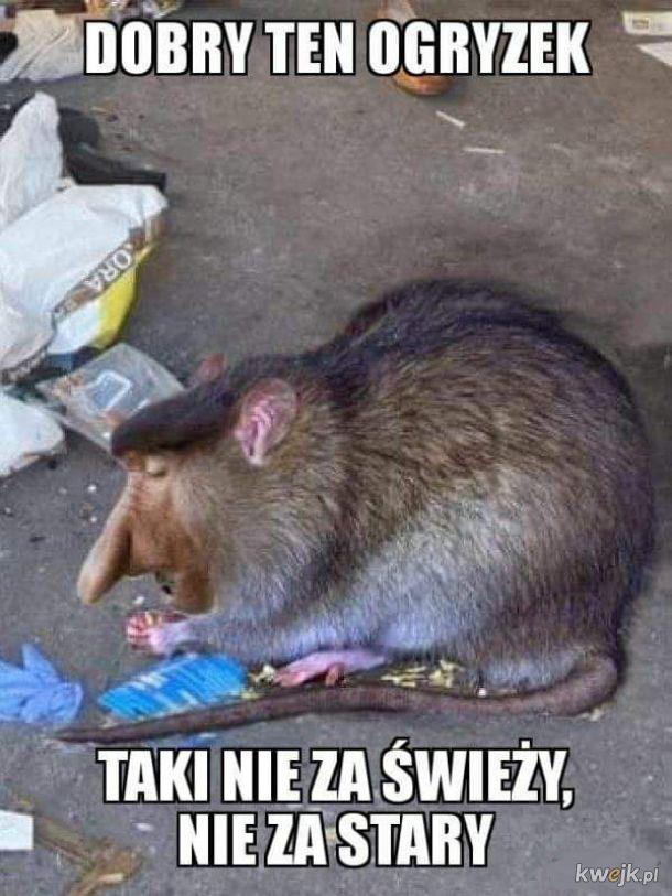 Januszczur