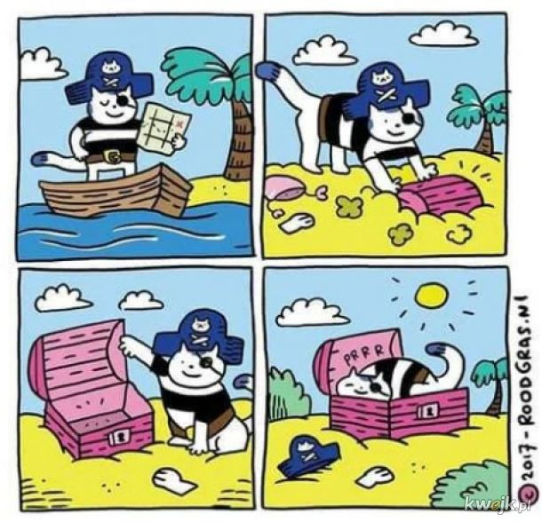Kotek Pirat