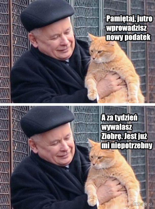 Koty rządzą światem