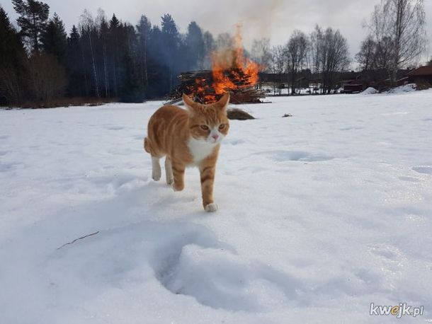 Kilka dowodów na to, że koty to dzieło Szatana. Albo kosmitów. Szatańskich kosmitów?