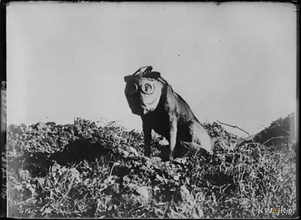 Gdyby ciekawił cię, jak podczas I wojny światowej wyglądały maski przeciwgazowe dla zwierząt, to jest to galeria dla Ciebie