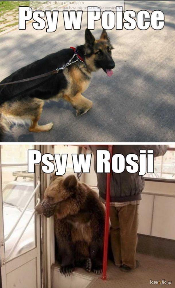 Psy w Rosji a Polsce