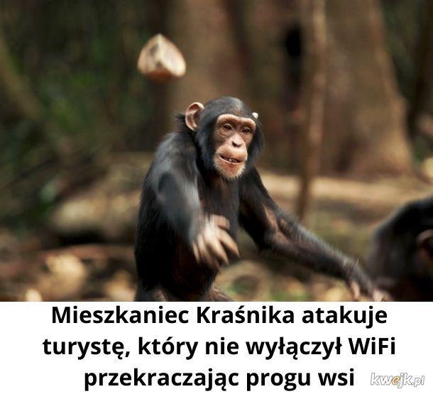 Przegięcie! Nie powinniśmy tak obrażać małp!