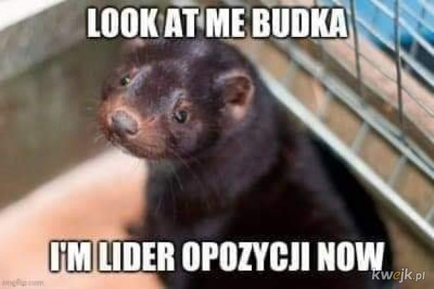 Look at me Budka