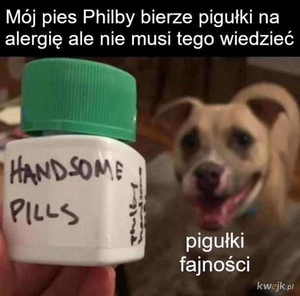 Tabletki dla psa