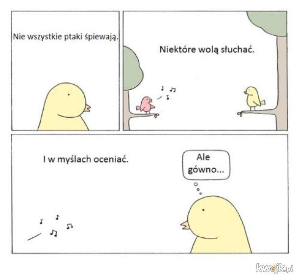 Ptaki śpiewają