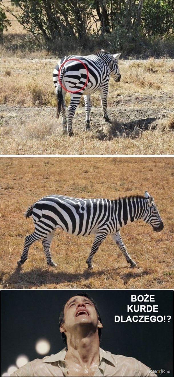 Perfekcjonista wrócił smutny z wycieczki na safari