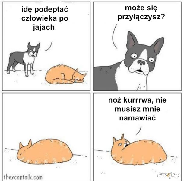 Ej kocie pobudka
