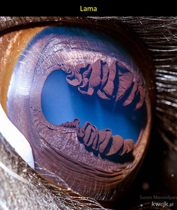 Oczy różnych zwierząt w makro