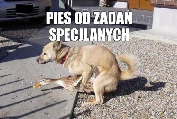 Bardzo specjalnych