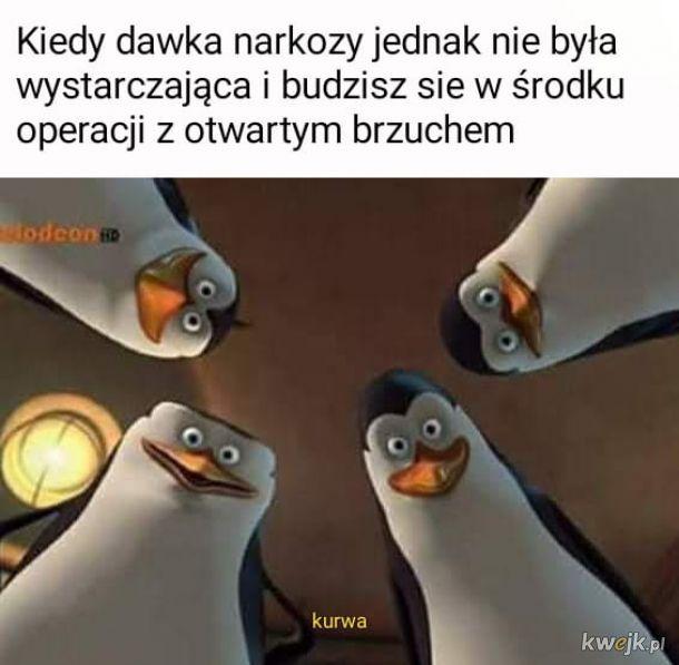 Podj****e z Pingwinawki