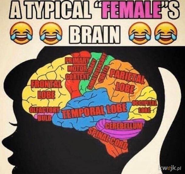 Mózg typowej kobiety