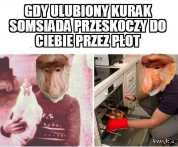 Ulubiony kurak