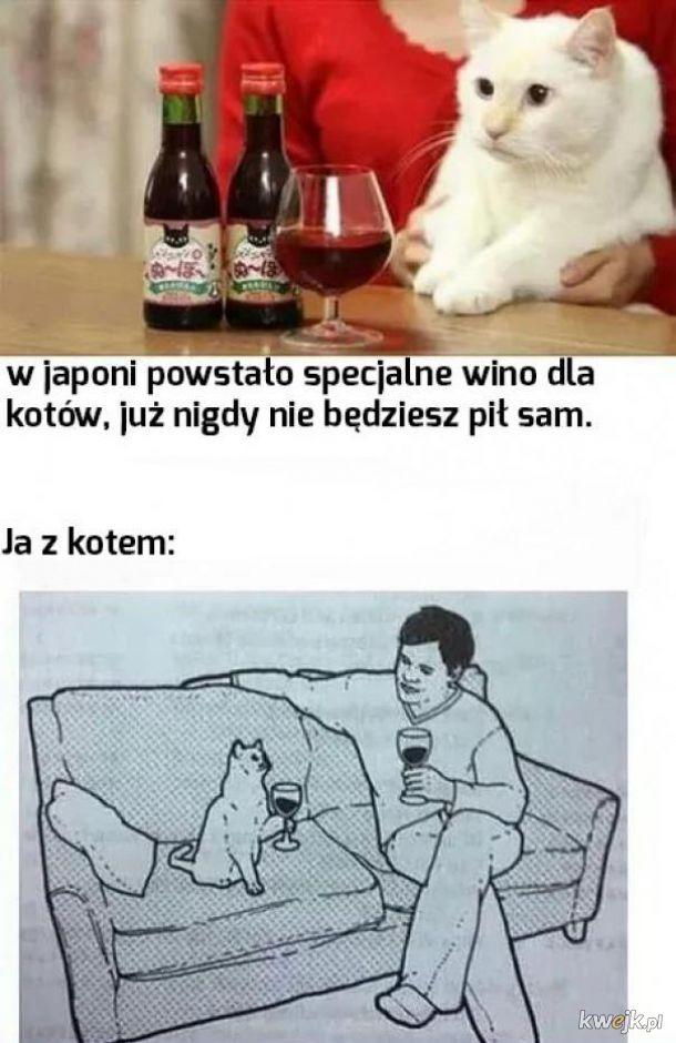 Wino dla kotów