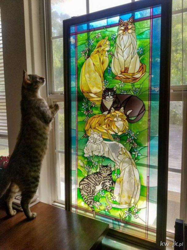 Pan kot i piękny witrażyk