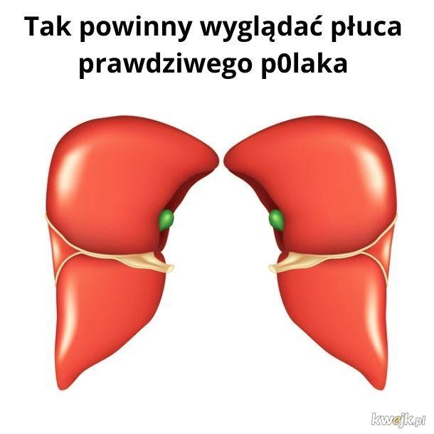 Wątrobo-płuca