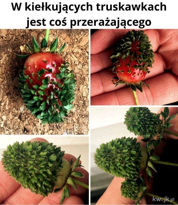 Straszne truskawy