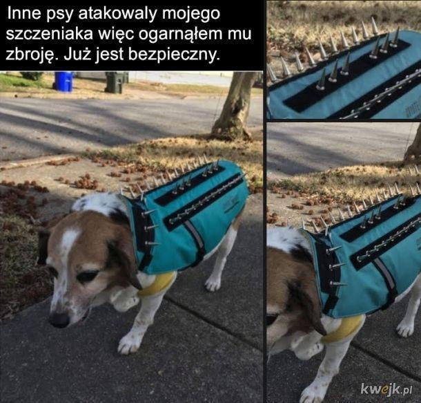 Bezpieczny psiak