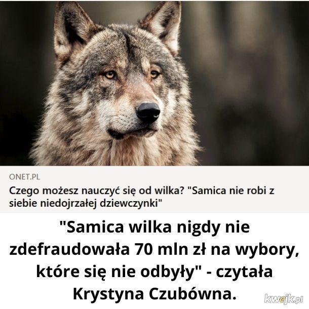 Wilkeł