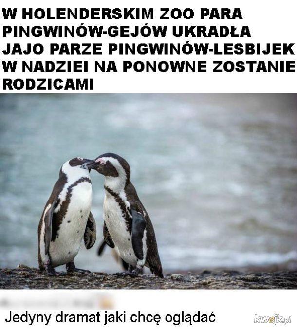 Dramat pingwinów