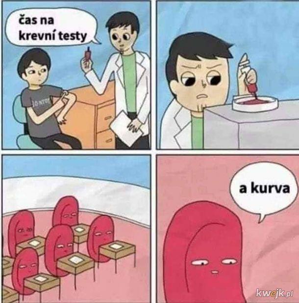 Testy krwi