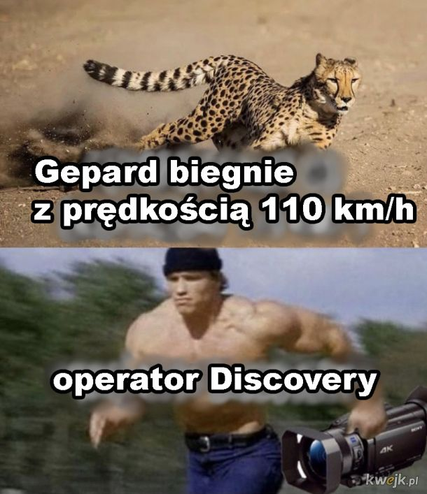 Operator Discovery