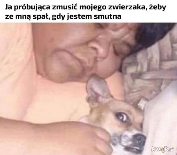Kochaj mnie piesu