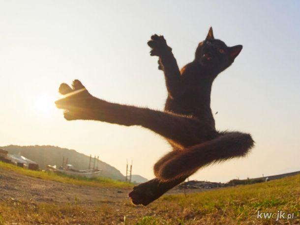 Koty ninja w obiektywie japońskiego fotografa