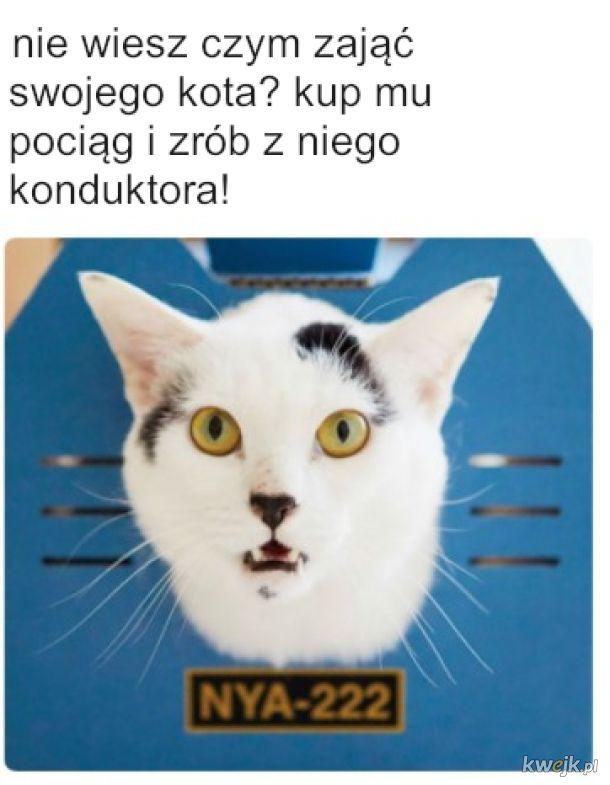 Kot, który jeździł koleją
