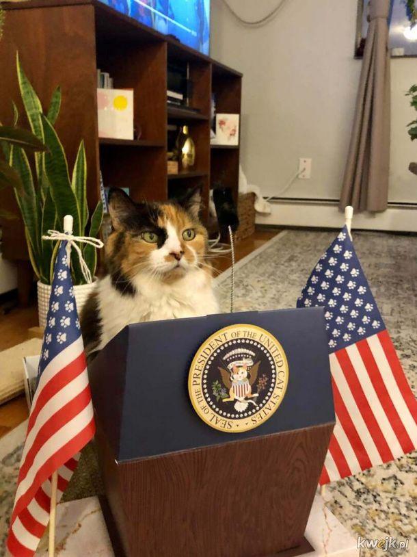 Prezydent kotów