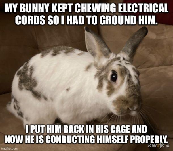 Elektrólik