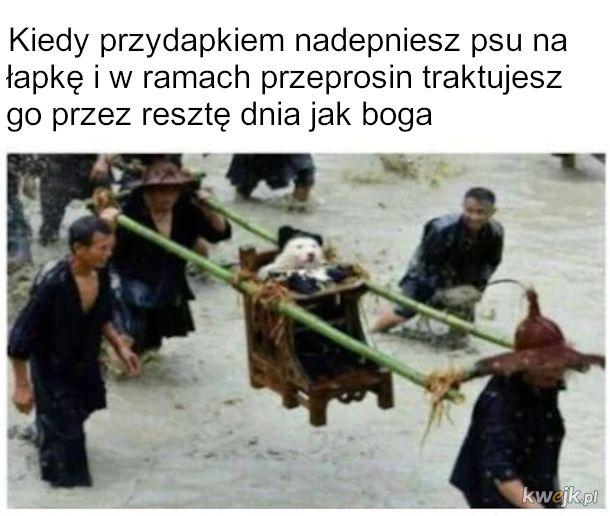 Pan Pies Poszkodowany Przytulany