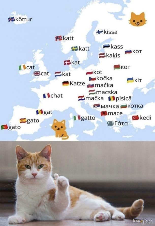Kot w różnych językach