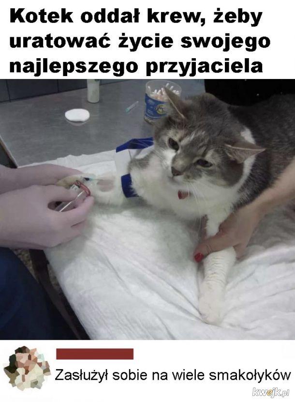 Dobry kotek