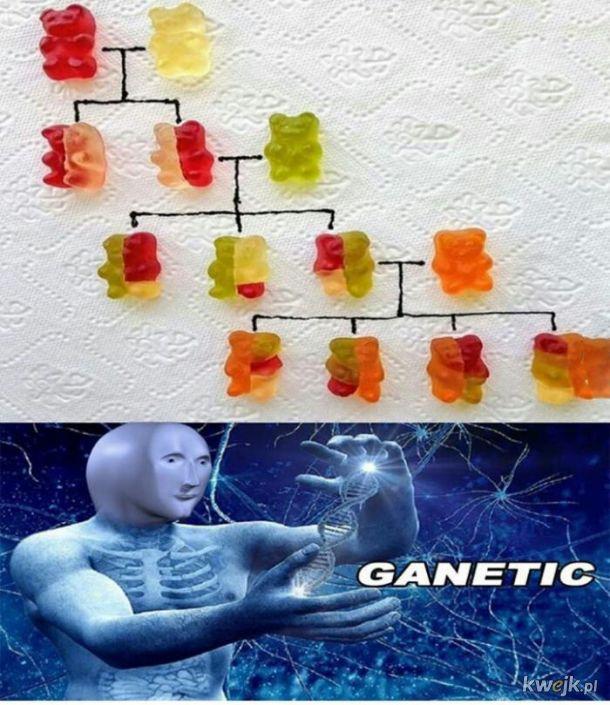 Zabawa genetyką
