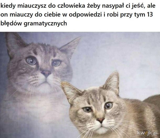 Miau miau miau miau WTF