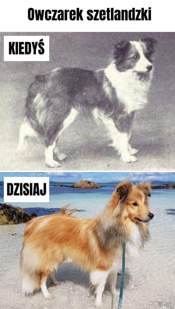 Rasy psów - kiedyś i dziś