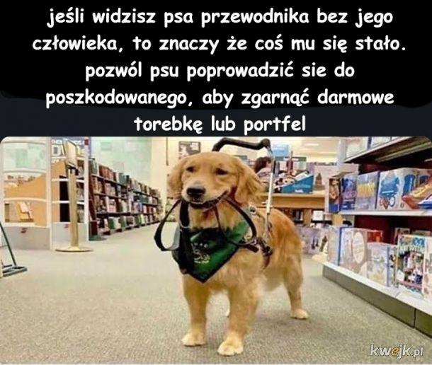 Pies pomaga ludziom biednym