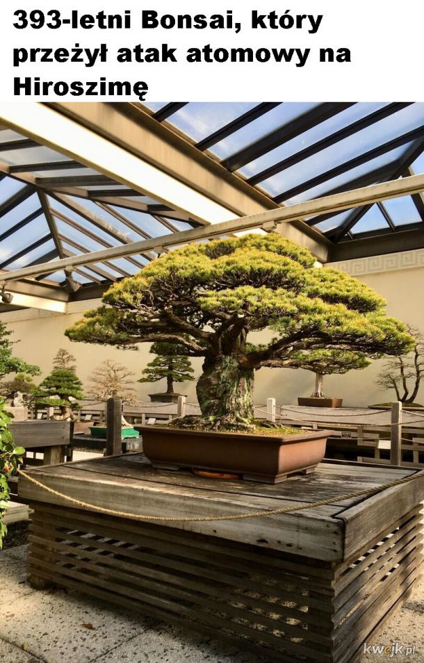 Historyczny bonsai