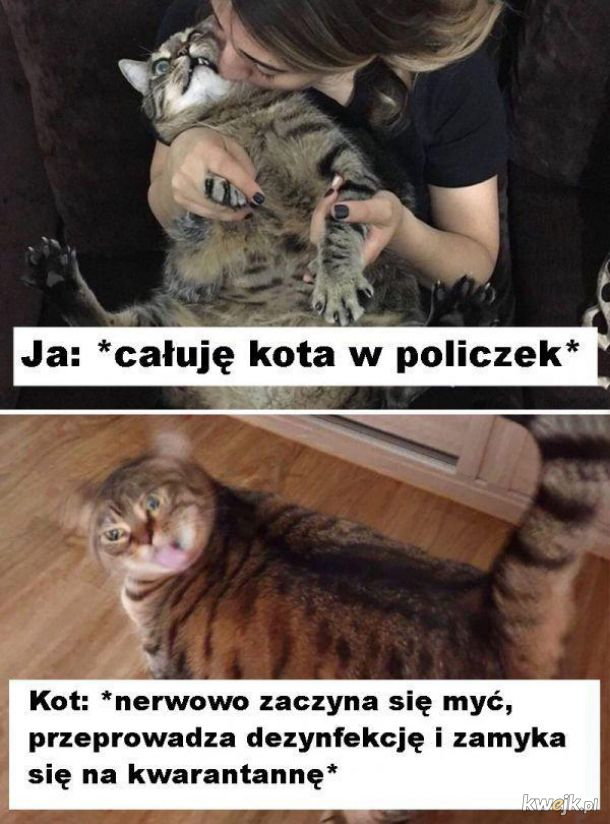 Całowanie kota