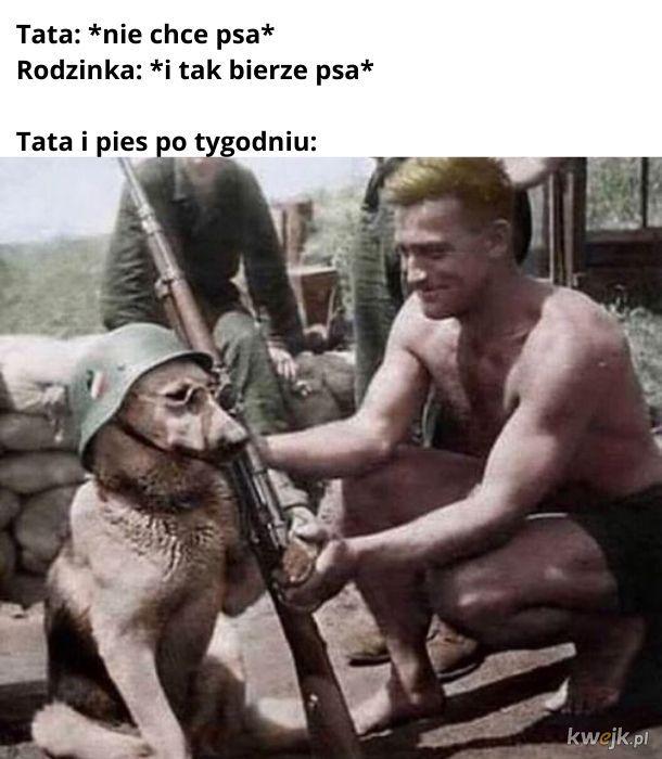 Nie dawałbym owczarkowi niemieckiemu broni...