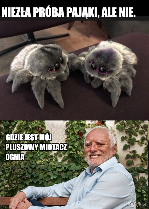 Słodkie pająki