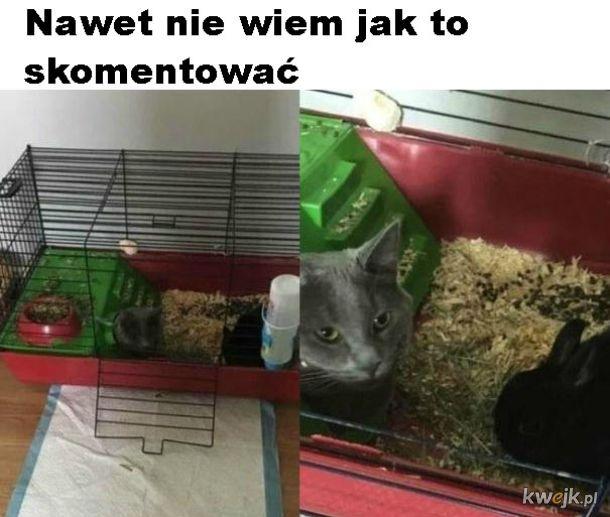 Biedny królik