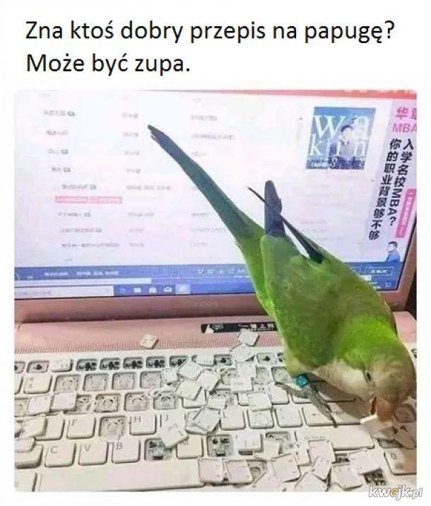 Papug, nie żyjesz.