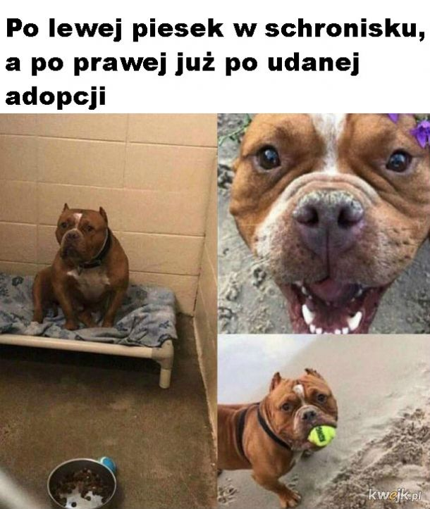 Warto adoptować zwierzaki