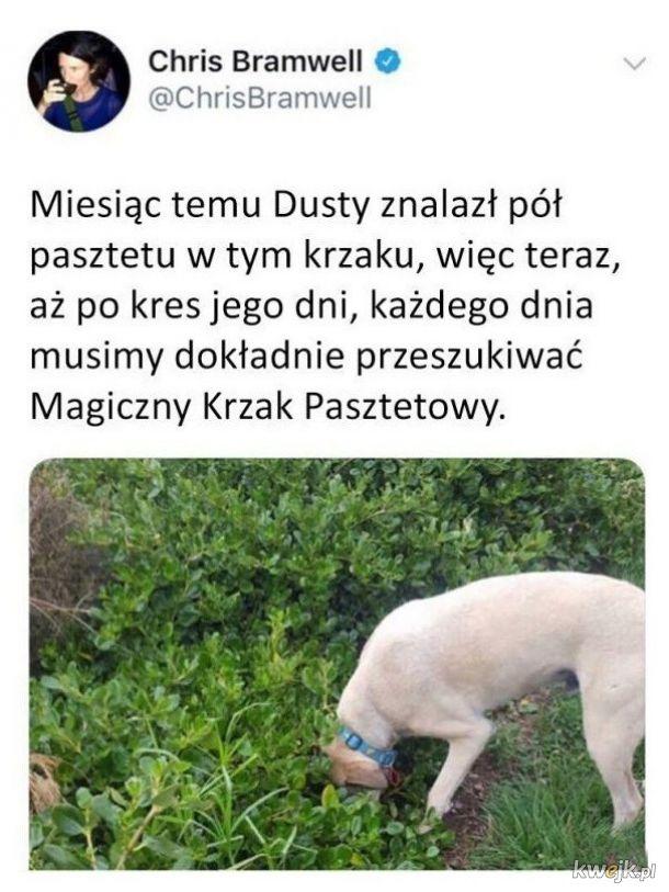 Pasztetowy pies