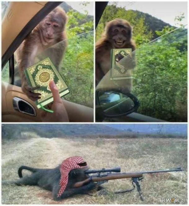Co się dzieje kiedy dasz małpie to czego się nie powinno